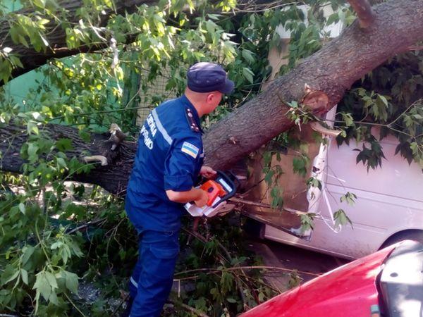 На Кіровоградщині дерево впало на «Volkswagen»