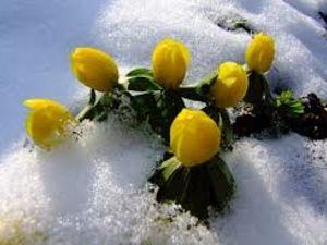 Погода у Кропивницькому 27 березня