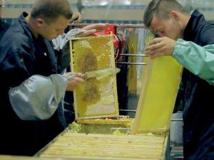 Українське бджільництво отримує друге дихання  (ФОТО)