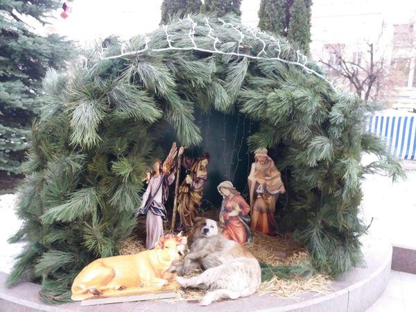 Кумедний Кропивницький: Безпритульний собака знайшов прихисток у Діви Марії (ФОТО)