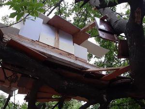 Кропивницький: Підлітки спорудили хату на дереві (ФОТО)