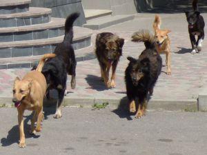 Кропивничани просять вирішити питання щодо бродячих собак