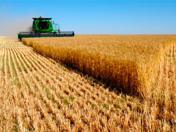 """Кіровоградщина: Чи законно перевіряють підприємство """"Червоний землероб""""?"""