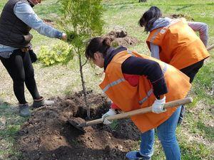 """У Кропивницькому сквер """"Молодіжний"""" поповнився 160 новими деревами (ФОТО, ВІДЕО)"""