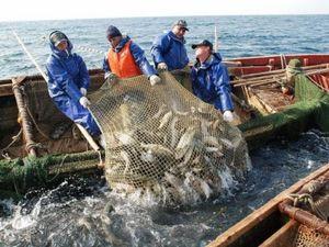 На Кіровоградщині зросли обсяги вилову риби