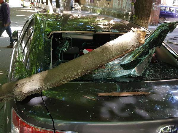 У Кропивницькому на іномарку впало дерево (ФОТО)