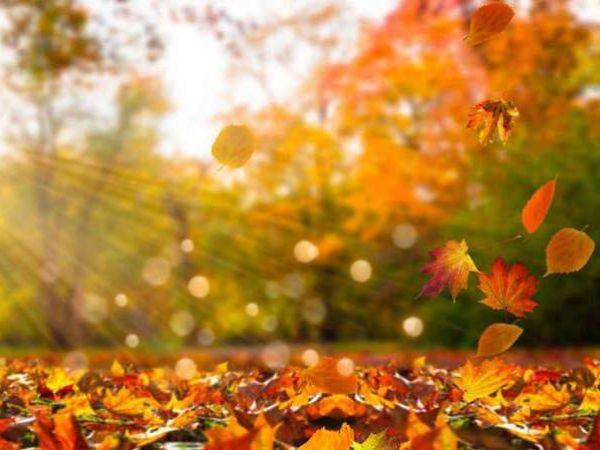 Погода у Кропивницькому 14 жовтня, на Покрову