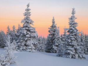 Погода у Кропивницькому 14 грудня