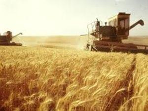 Скільки на Кіровоградщині продали зерна у цьому році?