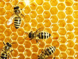 Кіровоградщина: Як пасічникам вберегти своїх бджіл?