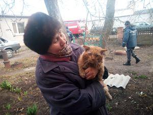 Рятувальники Кіровоградщини визволили кота та собаку із безвихідного становища
