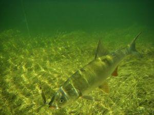 Рибогосподарську компанію змусили повернути водосховище державі