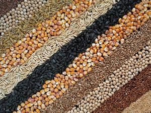 Який врожай зерна і овочів зібрали на Кіровоградщині цієї осені?