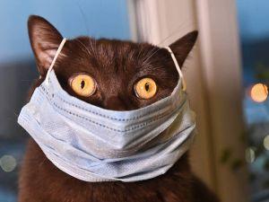 Де у Кропивницькому можна недорого придбати медичні маски?