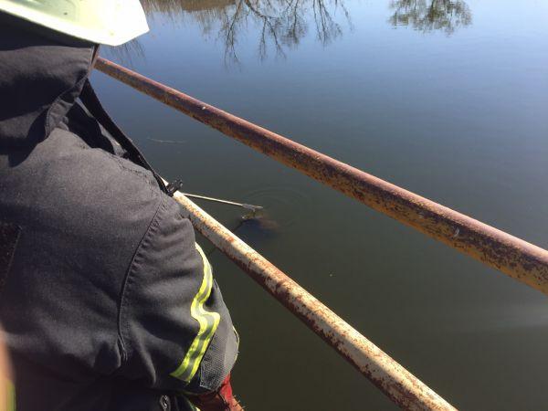 Кіровоградщина: У Черняхівці у річці потонув чоловік
