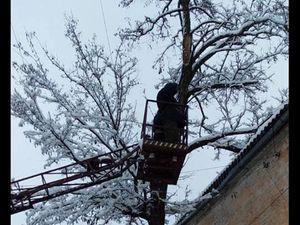 Кропивницькі комунальники, попри заборону, пиляють дерева навіть у снігопад (ФОТО)