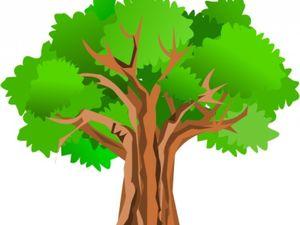 У Кропивницькому рубають дерева під забудову (ВІДЕО)
