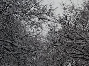 Погода у Кропивницькому 22 лютого