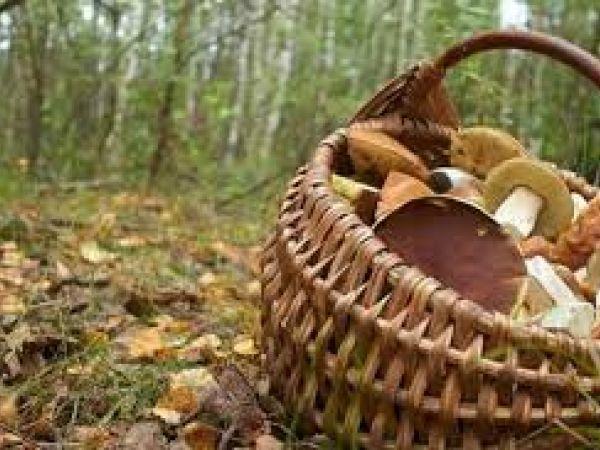 На Кіровоградщині восьмидесятирічний грибник заблукав у лісі