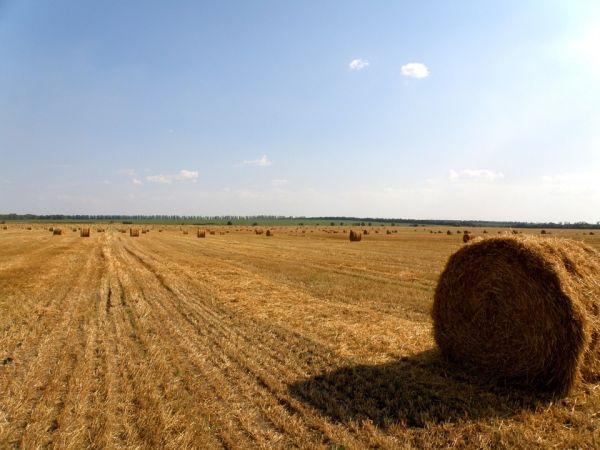 Кіровоградщина: У Великій Северинці підсудна незаконно заволоділа земельною ділянкою