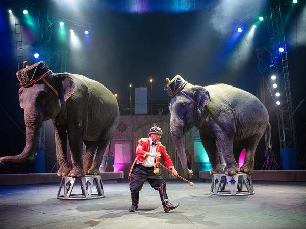 Цирк «КОБЗОВ» презентує неймовірне новорічне шоу світового рівня у Кропивницькому (ФОТО)