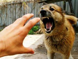 У Кропивницькому вакцинують від сказу котів і собак (ВІДЕО)
