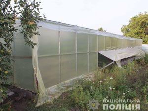 У Кропивницькому чоловік виростив коноплі на мільйон гривень