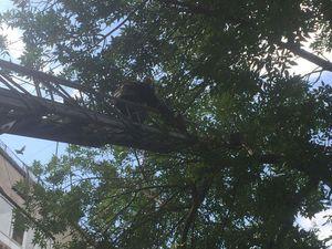 На Пацаєва розчахнулось і впало аварійне дерево