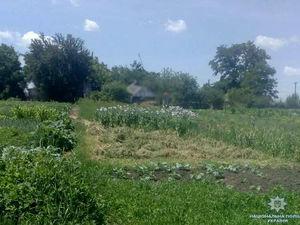 На Кіровоградщині чоловік вирощував у себе на городі снодійний мак