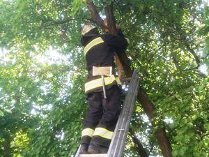 На Кіровоградщині трирічний хлопчик видерся на дерево (ФОТО)