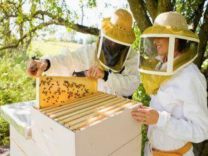 Мешканці Кіровоградщини можуть безкоштовно вивчитися на бджоляра
