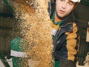 Агропідприємства області потребують апаратників-екстракторників та оброблення зерна