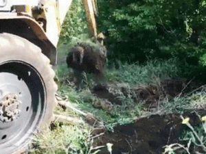 Працівники Держспоживслужби захоронили звалища боєнських відходів на околиці Кропивницького