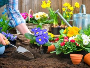 Безробітних Кіровоградщини запрошують безкоштовно стати квітникарями