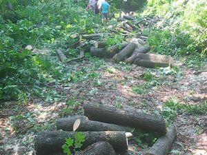 На Кіровоградщині депутата від БПП застукали на вирубці лісосмуги (ФОТО)
