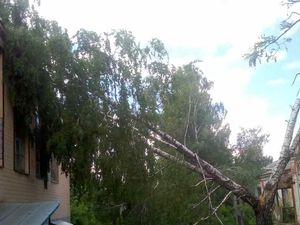Минулої доби рятувальники Кіровоградщини усунули небезпеку від двох аварійних дерев