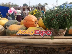 Повна програма заходів на Agroexpo-2018 у Кропивницькому