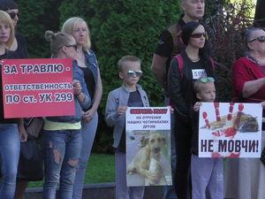 Хто захистить бездомних собак у Кропивницькому? (ФОТО)