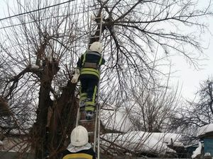 Знам'янка: Кіт застряг на дереві на два дні