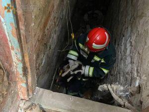 Кіровоградщина: У Новоукраїнці цуцик потрапив до підвалу