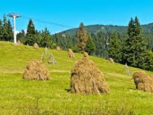Скільки зібрали врожаю сільгоспкультур у Кіровоградській області?