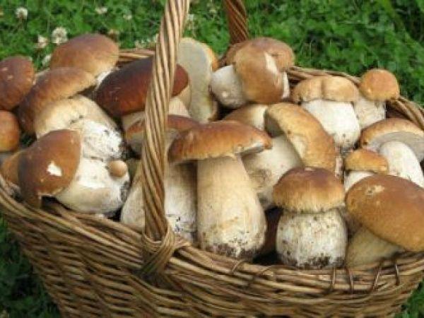 Як вберегтися від отруєння грибами?
