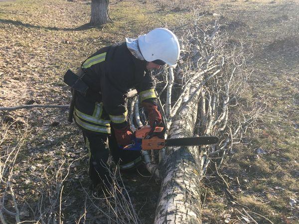 Кіровоградська область: Рятувальники прибирають дерева, що впали після буревію