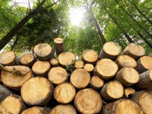 """""""Зелений"""" кешлесс ПриватБанку зберіг більше 10 гектарів лісу"""