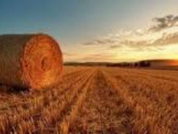 На Кіровоградщині фермери скаржаться, що їм не дають збирати урожай