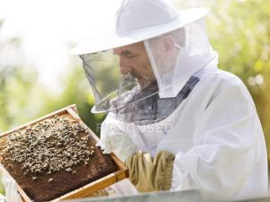 На Кіровоградщині відбудеться фестиваль бджолярів KropHoney Fest