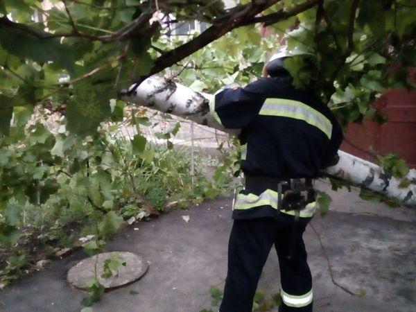 Кіровоградська область: Рятувальники двічі розпилювали аварійні дерева