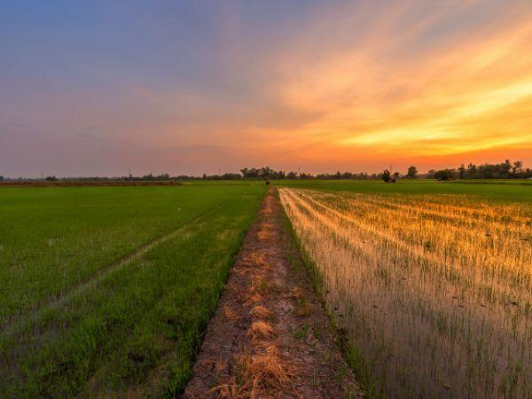 На Олександрійщині орендар не сплачував кошти за землю