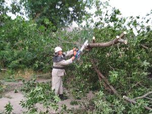Через шквальні вітри і грози на Кіровоградщині ломаються дерева