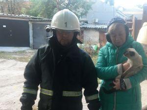 У Кропивницькому рятувальники зняли домашнього улюбленця з небезпечної висоти